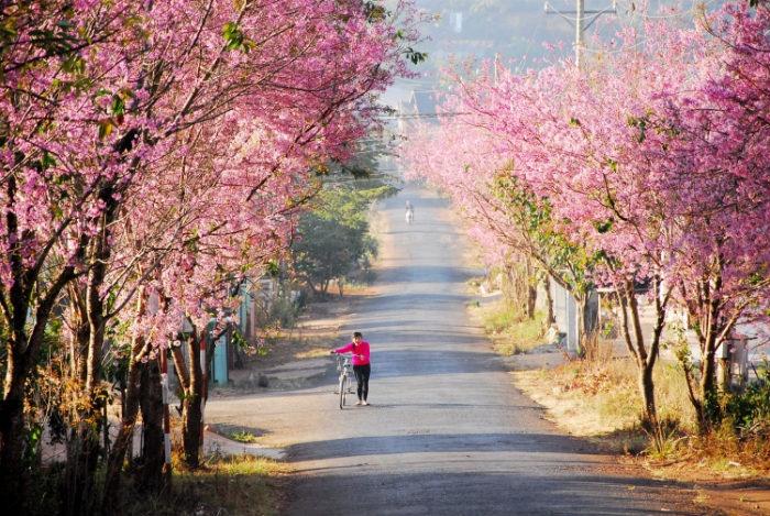Du lịch Đà Lạt tháng 2 đẹp lung linh