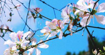 Chia sẻ kinh nghiệm đi phượt Điện Biên mùa hoa ban từ A-Z