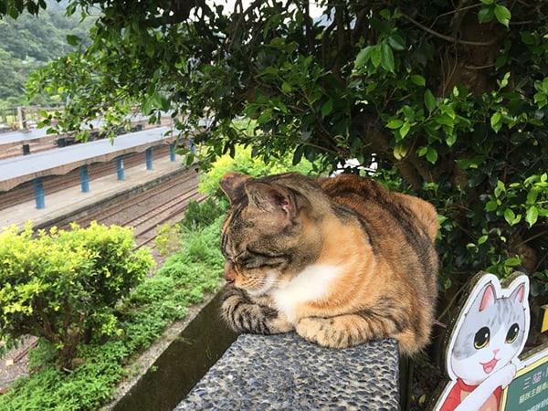 Làng mèo Houdong, Đài Loan