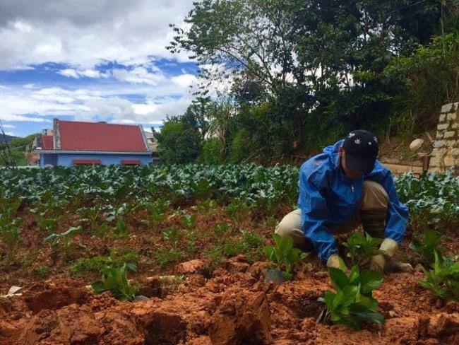 Homestay trồng rau sạch Đà Lạt