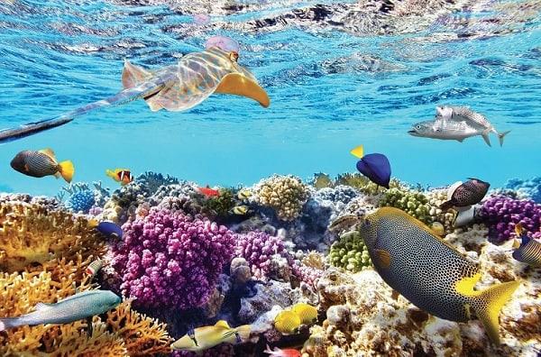 Khu vực ngắm san hô tại Vĩnh Hy