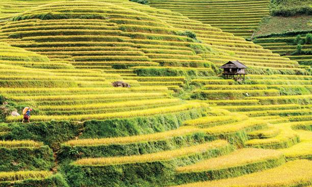 Du lịch Sapa tháng 9 là thời điểm để ngắm những thửa ruộng bậc thang lúa chín vàng