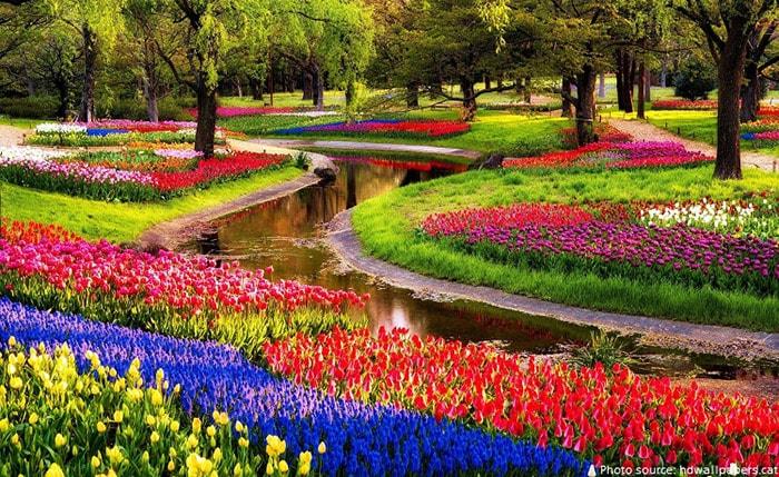 Rừng Keukenhof - Hà Lan mệnh danh là đẹp nhất thế giới
