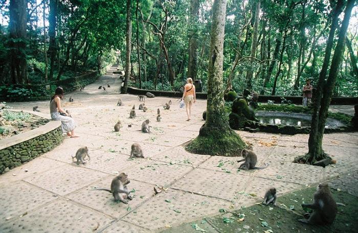Rừng Khỉ ở Ubud, Bali, Indonesia