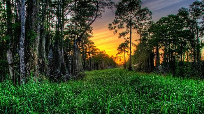 Khu vườn Cypress ở Nam Carolina