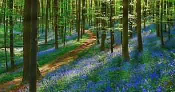 Khám phá những khu rừng đẹp như thiên đường trên thế giới