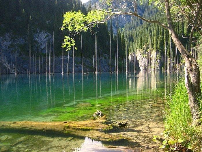 Rừng Sunken ở Kazakhstan