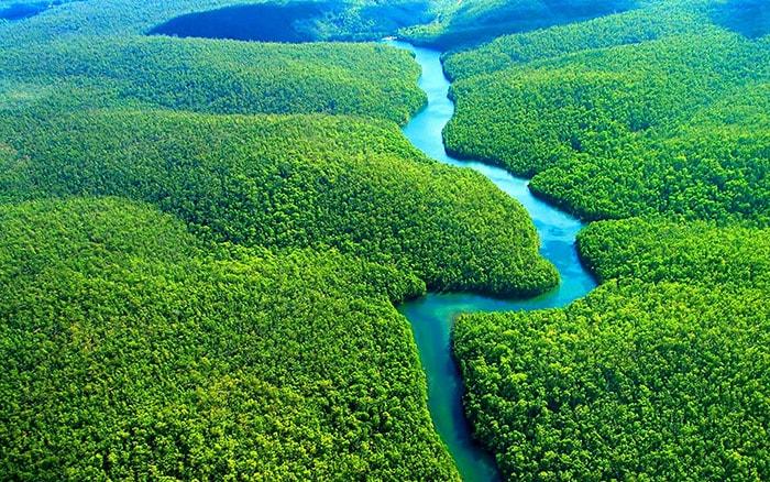 Rừng Amazon ở Brazil