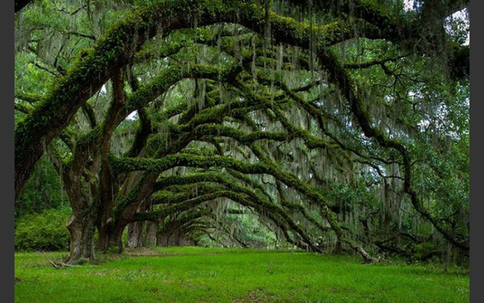 Rừng Savannah, Georgia