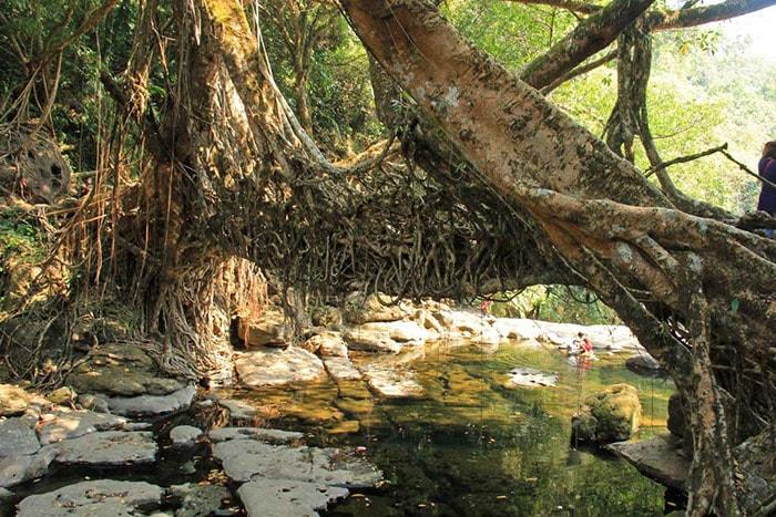 Rừng Meghalaya ở Ấn Độ
