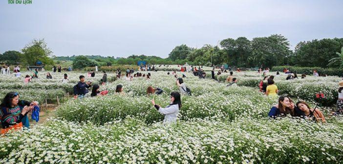 Thảo nguyên hoa Long Biên – Địa điểm check in cho giới trẻ cực đẹp