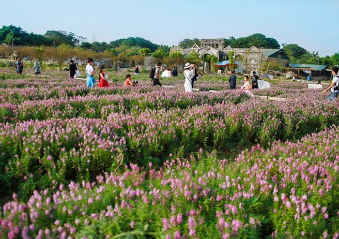 Thảo nguyên hoa Long Biên đầy mê hoặc giữa lòng Hà Nội