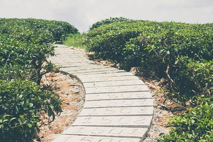 Con đường trên đồi chè Cầu Đất Đà Lạt