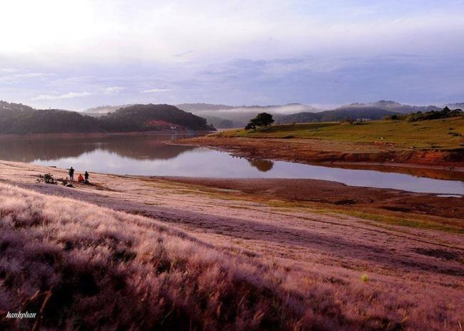 Đồi cỏ hồng Đà Lạt ở khu vực Cây cô đơn