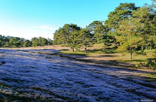 Đồi cỏ tuyết ở Đà Lạt thường có vào tháng 11