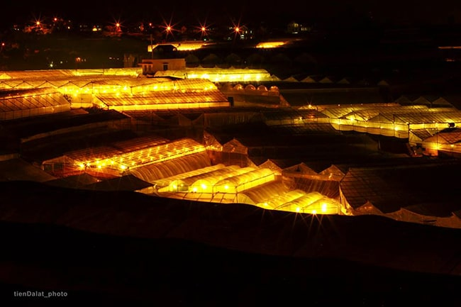 Làng hoa Thái Phiên rực rỡ ánh sáng về đêm