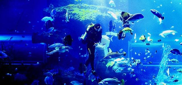 Không gian xanh ở  Viện Hải dương học Nha Trang