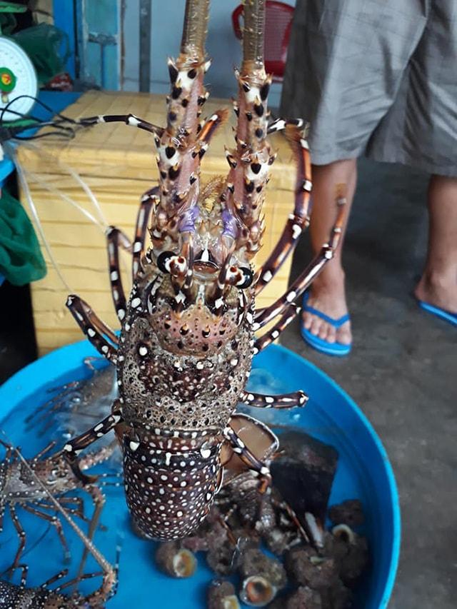 Đặc sản tôm hùm trên đảo Bình Hưng
