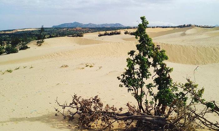 Đồi cát Nam Cương - Ninh Thuận