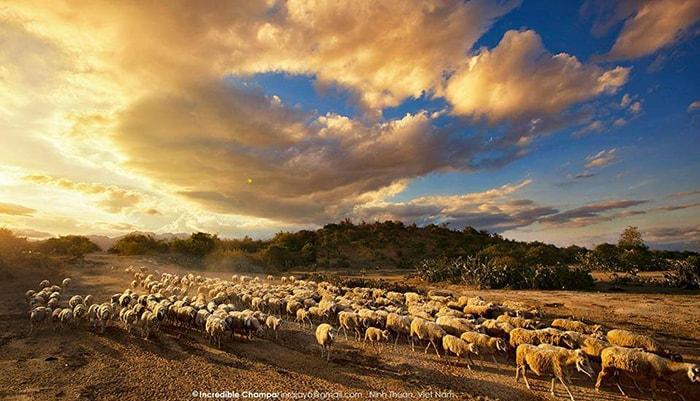 Vẻ đẹp của đồi cừu An Hòa - Ninh Thuận