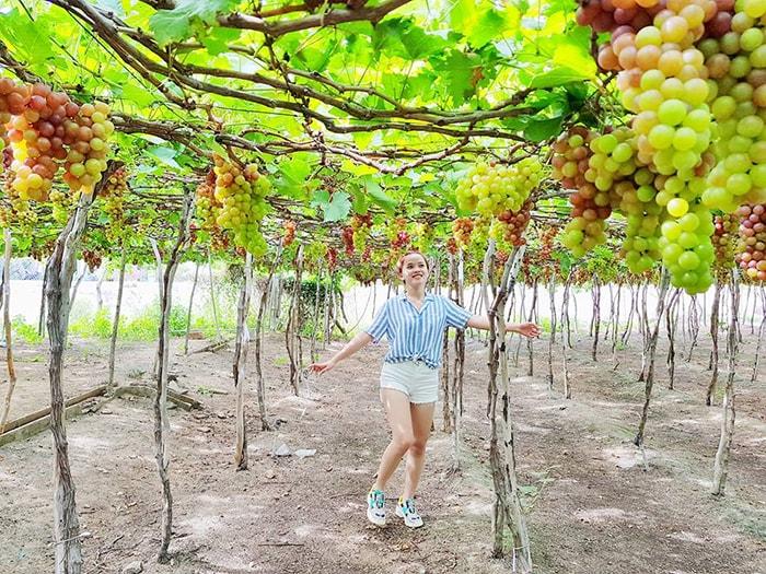 Vườn nho Thái An nổi tiếng ở Ninh Thuận