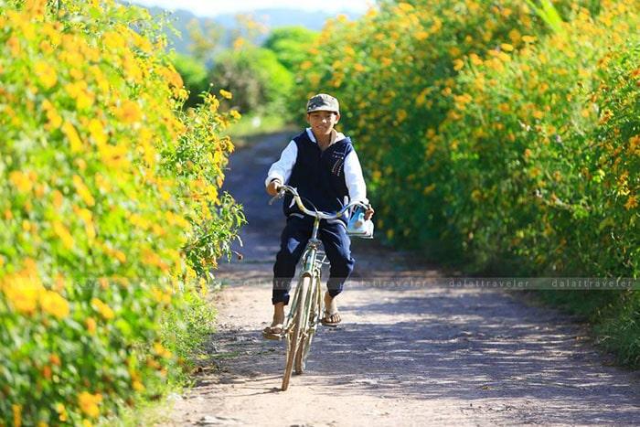 Những con đường ngập trà sắc vàng của hoa dã quỳ ở Đà Lạt tháng 10