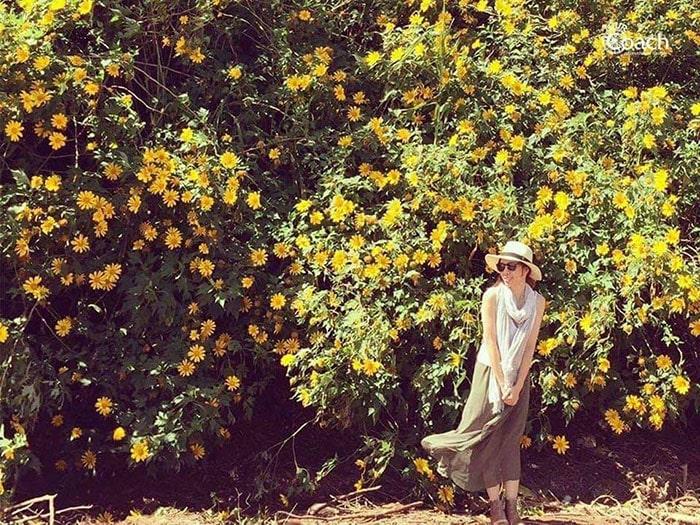 Tháng 10 lên Đà Lạt ngắm hoa dã quỳ