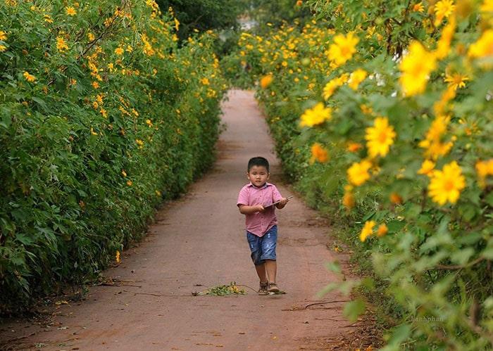 Hoa dã quỳ Đà Lạt thường ở vào cuối tháng 10