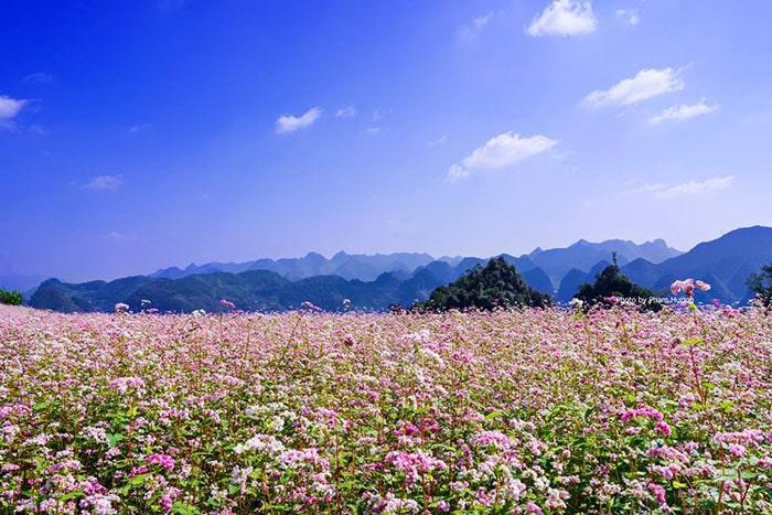 Tháng 10 du lịch Hà Giang ngắm hoa tam giác mạch