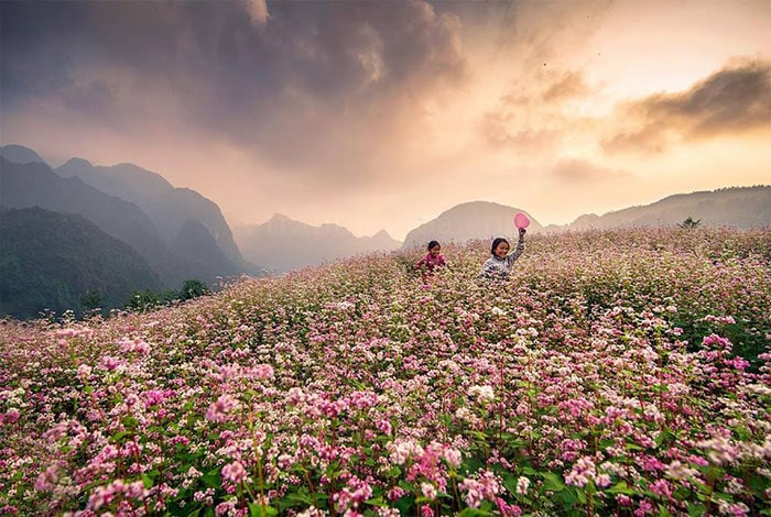 Tháng 10 là mùa hoa tam giác mạch ở Hà Giang