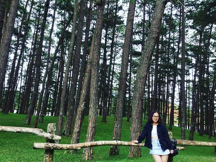 Đồi cây xanh mướt bên trong khu du lịch Đồi Mộng Mơ