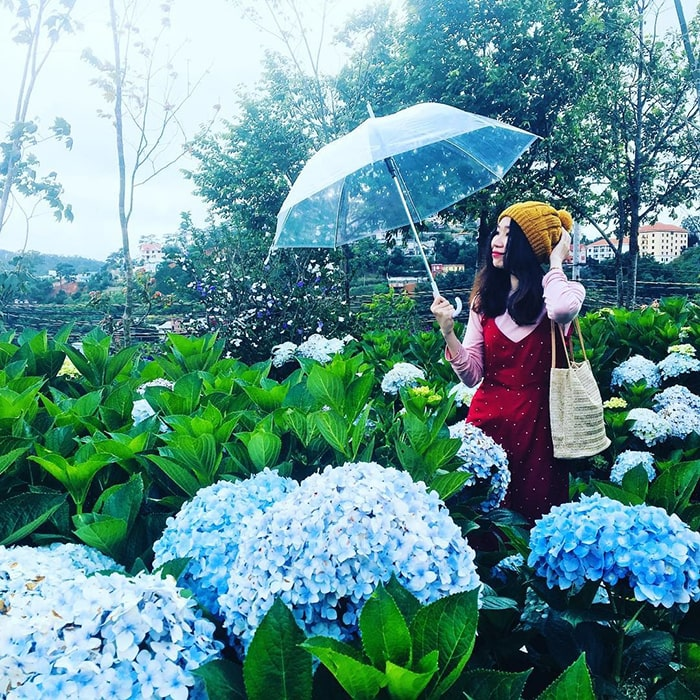 Vườn cẩm tú cầu trong khu du lịch Lá Phong