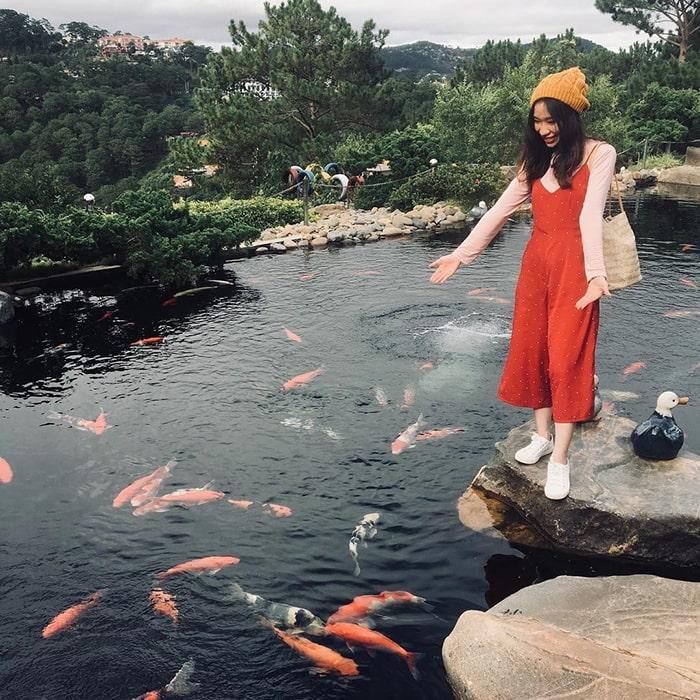 Hồ cá Koi trong khu du lịch Lá Phong - Đà Lạt