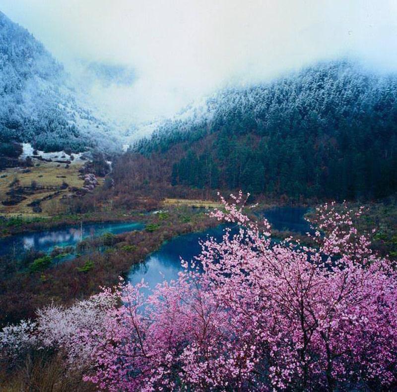 Cửu Trại Câu mùa xuân