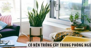 Có nên trồng cây trong phòng ngủ?