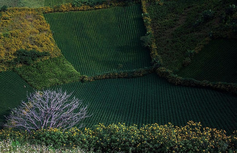 Chư Đăng Ya là 1 địa điểm không thể bỏ qua khi đến Gia Lai